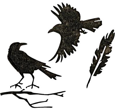 Feathers & Ravens 662376