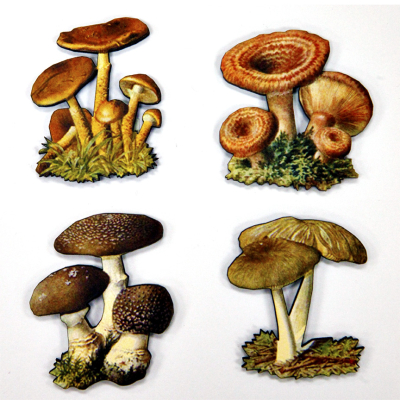 Mushrooms 10