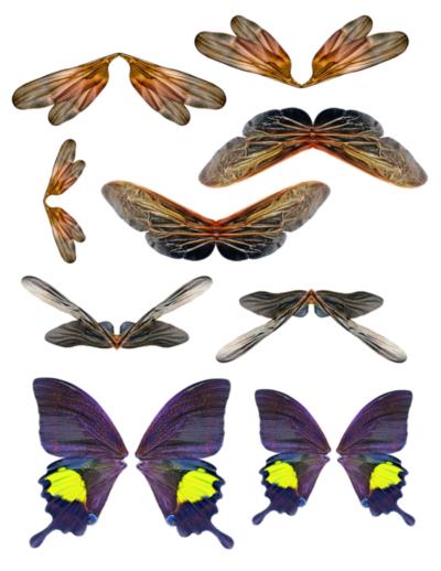 Fairie Wings 11