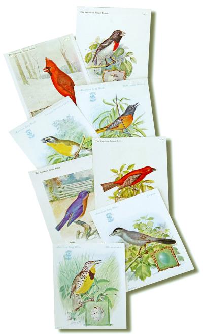 Singer Series Birds